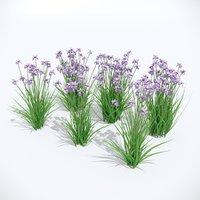3D iris sibirica charming billy model