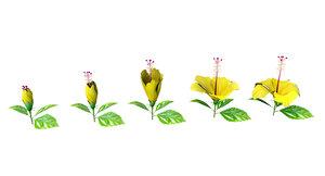 3D hibiscus flower
