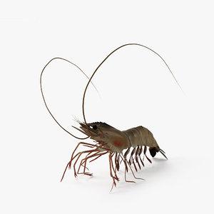 3D shrimp