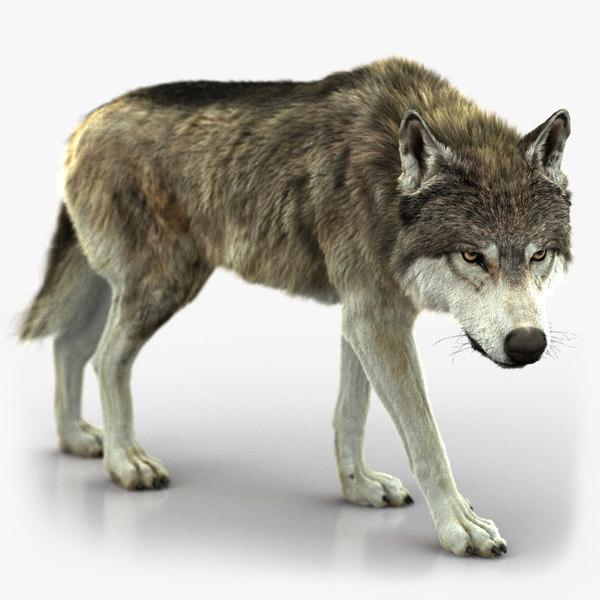 wolf rigged 4 fur 3D model