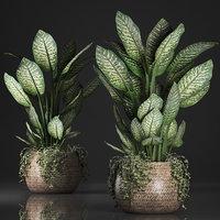 plants rattan dieffenbachia basket model