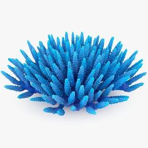 acropora coral 3D model