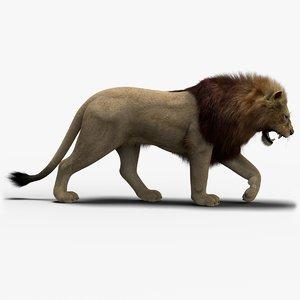 3D model photo realistic lion 3