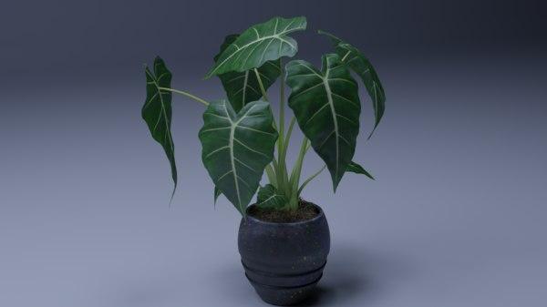 alocasia plant pot 3D