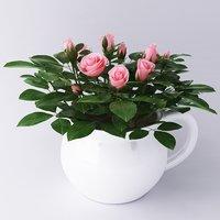 Houseplant roses
