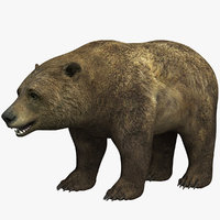 3D model bear animal beast