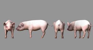 cute pig 3D