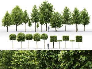 pack trees tilia 01 3D