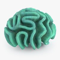 pectinia coral 3D model