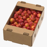 Cardboard Display Box 01 with William Pear Red