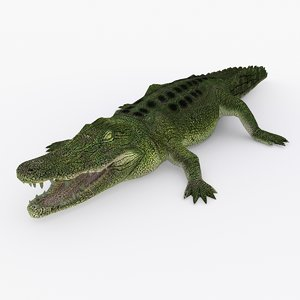 crocodile type 01 b 3D model