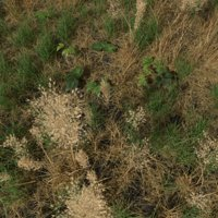Dry Bent Grass Meadow Patch