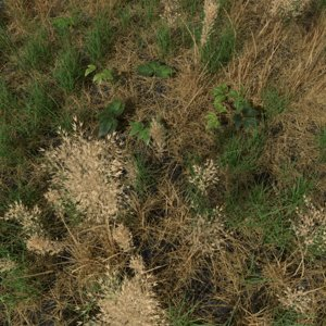 3D dry bent grass meadow model