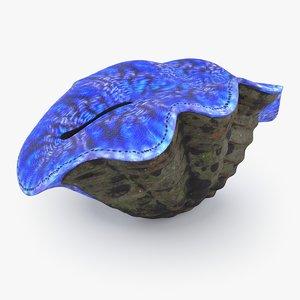 tridacna coral model
