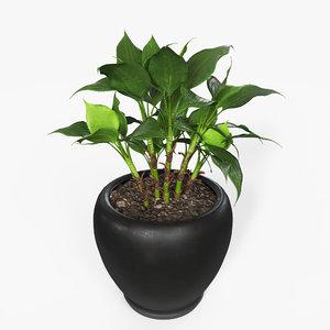 3D model plant pbr