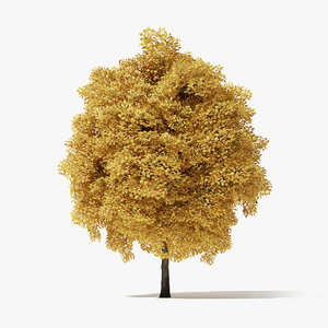 3D autumn norway maple tree model