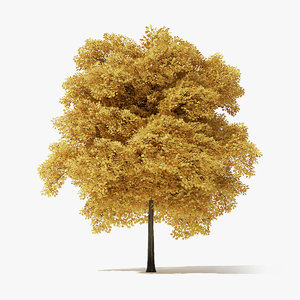 autumn norway maple tree 3D model