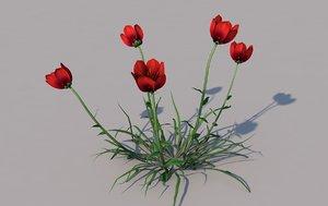 3D coquelicot flower model