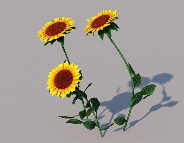 sun flower sunflower model