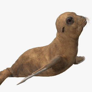 baby sea lion rigged 3D model