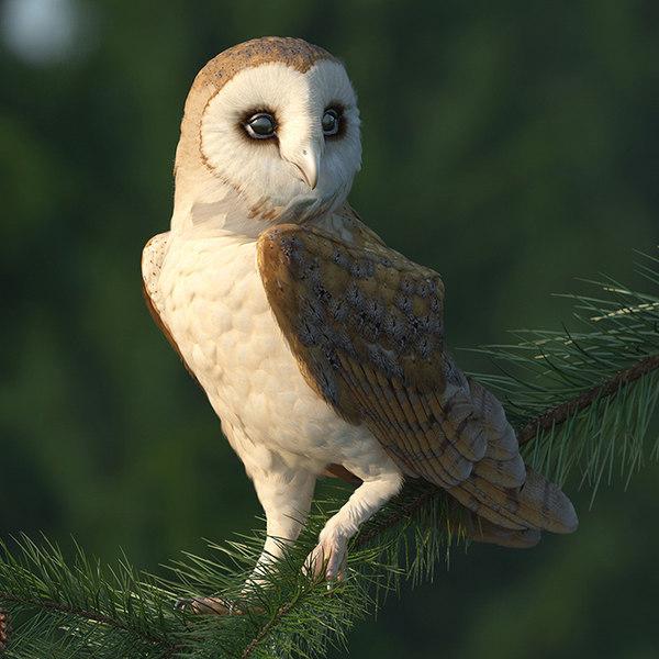 3D barn owl rigged model