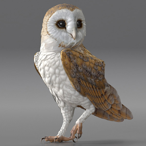 barn owl rigged 3D