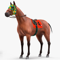 bay racehorse animal horse model