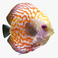 realistic discus fish 3D model