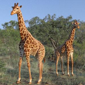 3D giraffe rigged