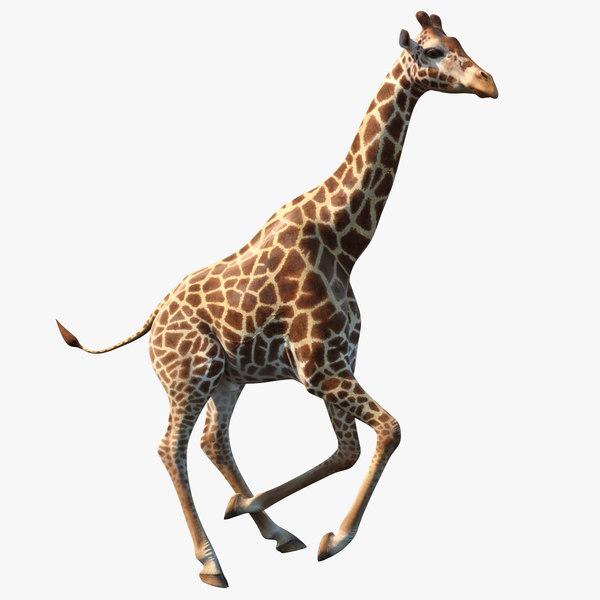 giraffe rigged 3D model