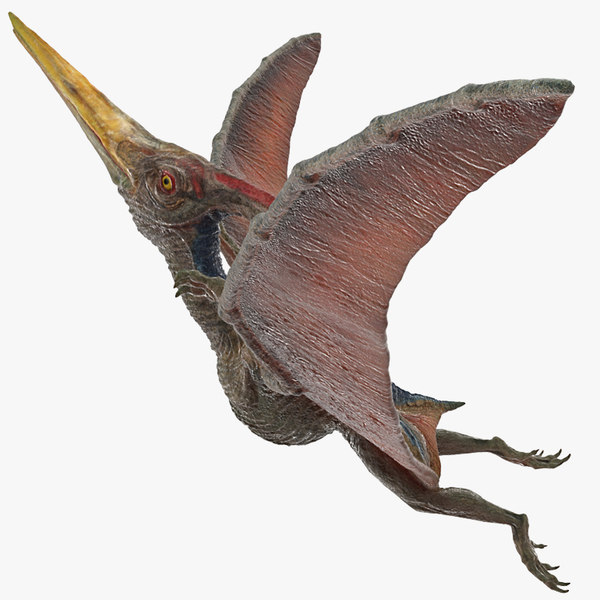 3D pteranodon rigged