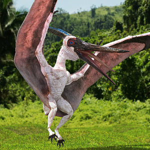 pteranodon pterosaur white rigged 3D model