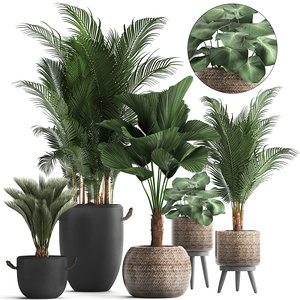 3D plants exotic palm tree model