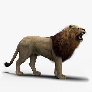 photo realistic lion 3 3D