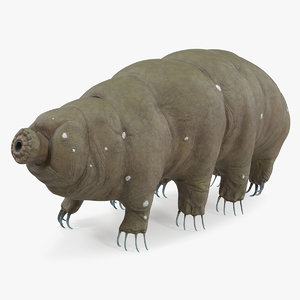 tardigrade rigged model