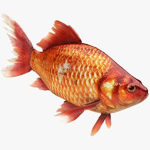 realistic gold fish 3D