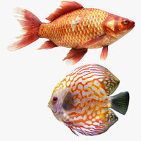 gold fish discus 3D