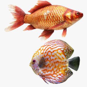 gold fish discus 3D
