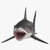 great white shark open mouth model