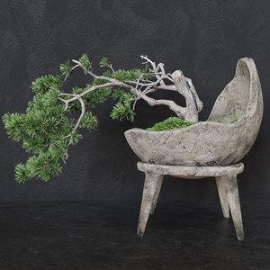 decorative pine tree bonsai 3D model