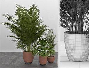 potted chamaedorea plants 3D