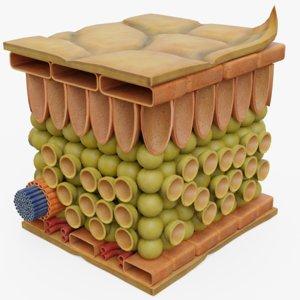 plant lower model