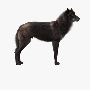 realistic rigged black wolf 3D model
