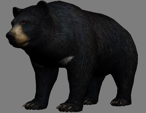 3D model bear beast mammal
