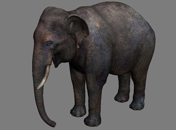 elephant wildlife animal 3D model