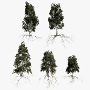 3D birch summer trees