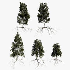 3D birch summer trees