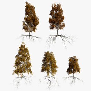 birch autumn trees 3D model
