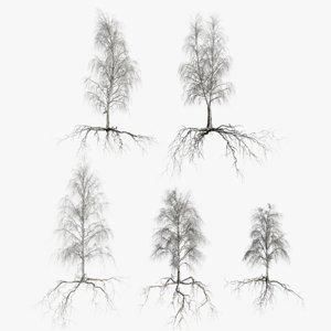 3D birch dry trees