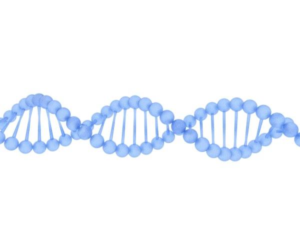dna deoxyribonucleic acid 3D model